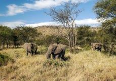 Elephants in the savannah of Tanzania Stock Photo