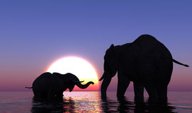 Elephants in the sea. Elephants bathing in the sea at sunset Royalty Free Stock Photos