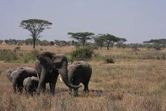Elephants of Serengeti Royalty Free Stock Photos