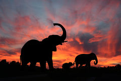 Elephants in a Serengety Sunset. This silhouette of an elephant family, bull, mother and baby, against a beautiful dramatic sunset is one of nature's masterpiece Stock Photography