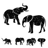 Elephants set Royalty Free Stock Images