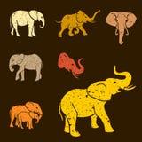 Elephants set Stock Photos