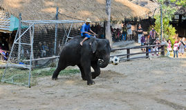 Elephants show Royalty Free Stock Photo