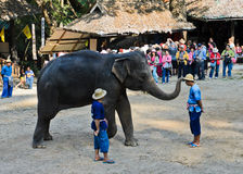 Elephants show Royalty Free Stock Image