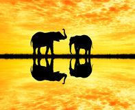 Elephants silhouette at sunset Royalty Free Stock Image