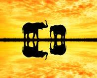 Elephants silhouette at sunset. Illustration of elephants silhouette at sunset Royalty Free Stock Image