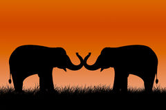 Elephants silhouettes Stock Photos