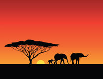 Elephants silhouettes, sunset Stock Photo