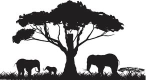 Elephants silouettes isolated on white background Stock Photography