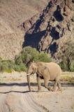 Elephants in the Skeleton Coast Desert Royalty Free Stock Image