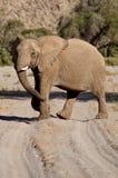 Elephants in the Skeleton Coast Desert Stock Photos