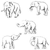 Elephants. A sketch by hand. Pencil drawing Stock Image