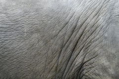 Elephants skin. An elephant skin taken in lovely Thailand Stock Images