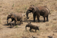 Elephants from the sky Royalty Free Stock Image