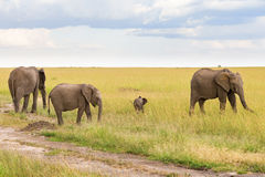 Elephants with a small calf in the savanna Stock Photo