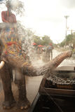 Elephants splashing water in Songkran festival in Thailand. AYUTTAYA, THAILAND - APRIL 15: Songkran Festival is celebrated in a traditional New Year s Day from royalty free stock photo