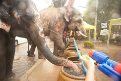 Elephants splashing water in Songkran festival in Thailand. AYUTTAYA, THAILAND - APRIL 15: Songkran Festival is celebrated in a traditional New Year s Day from stock photography
