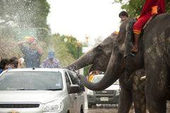 Elephants splashing water in Songkran festival in Thailand. AYUTTAYA, THAILAND - APRIL 15: Songkran Festival is celebrated in a traditional New Year s Day from Royalty Free Stock Image
