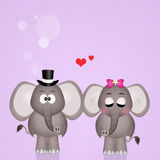Elephants spouses Stock Images