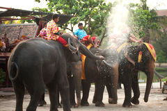 Elephants spray water on themselves happily. Royalty Free Stock Images