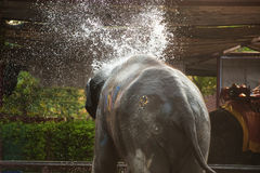 Elephants spray water on themselves happily. Stock Photography