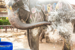 Elephants spray water on themselves happily. Stock Photo