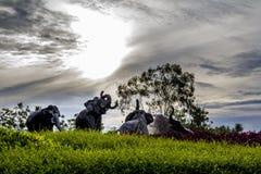 Elephants spraying water Stock Image