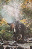 Elephants spraying water in the stream Royalty Free Stock Photos
