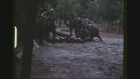 Elephants stacking tree trunks. Thailand, Chiang Mai Province, December 1983. Group of mahouts riding on six elephants, commanding them to pile up heavy tree stock footage