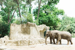 Elephants in a sunny zoo Stock Images