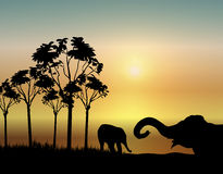 Elephants at Sunrise. Illustration of two elephants playing at sunrise Royalty Free Stock Photo