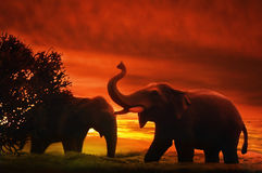 Elephants At Sunset Stock Photography
