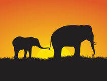 Elephants at Sunset. A baby elephant holds on to it's mothers tail as they walk in front of a setting sun Royalty Free Stock Photography