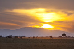 Elephants At Sunset. Sunset and landscape in Tsavo East National Park in Kenya with a group of elephants passing Stock Photos