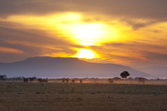 Elephants At Sunset. Sunset and landscape in Tsavo East National Park in Kenya with a group of elephants passing Royalty Free Stock Images