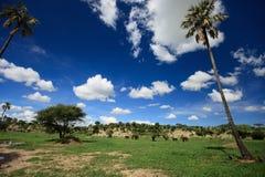 Elephants in Tarangire. Beautiful landscape of Tarangire national park, Tanzania Stock Photography