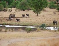 Elephants on Tarangiri-Ngorongoro Safaris in Africa. Elephants in Tarangiri-Ngorongoro Africa Safari, safari elephants, savanna, elephants in the natural Stock Image