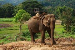 Elephants Thai Royalty Free Stock Photography