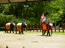 Elephants and Thai warriors performing a show stock photo