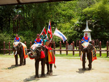 Elephants and Thai warriors performing a show royalty free stock photo