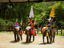 Elephants and Thai warriors performing a show royalty free stock image