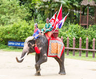 Elephants and Thai warriors show in thailand Royalty Free Stock Image