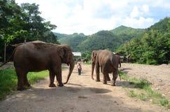 Elephants in Thailand Stock Photos