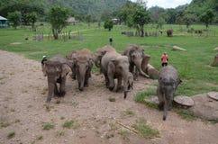 Elephants in Thailand Royalty Free Stock Photo
