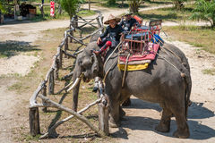 Elephants and their trainers in a camp are waiting for tourists Royalty Free Stock Photos