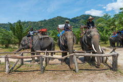 Elephants and their trainers in a camp are waiting for tourists Stock Image