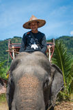Elephants and their trainers in a camp are waiting for tourists Stock Photo