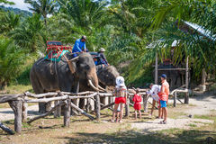 Elephants and their trainers in a tropical camp Royalty Free Stock Image