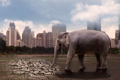 Elephants are thirsty, standing in a barren soil. stock photos