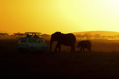 Elephants and Tourists at Sunset, Africa. Elephant mother and child silhouetted at sunset in Amboseli National Park, Kenya, approaching a van full of tourists Royalty Free Stock Photography